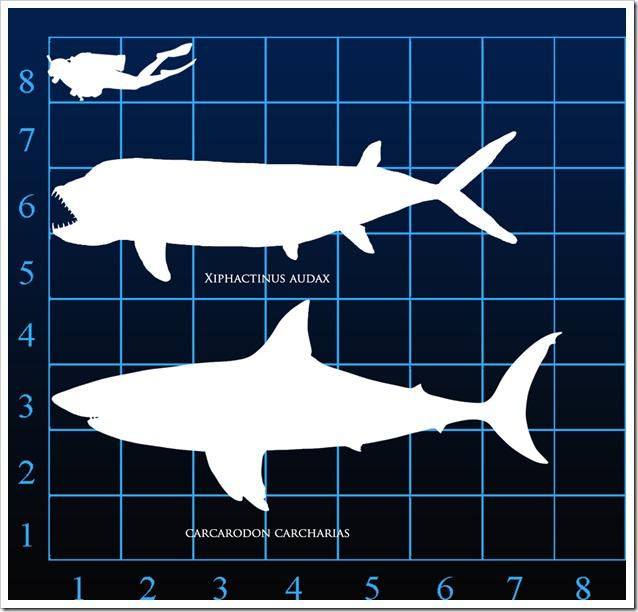 Domensioni rapportate ad un sub ed uno squalo bianco