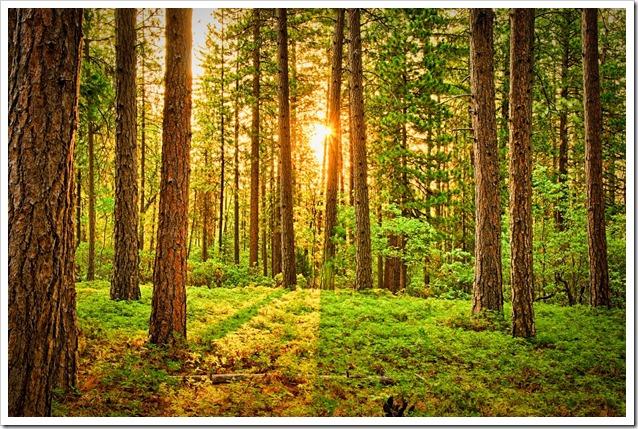 giornata-internazionale-foreste-2019